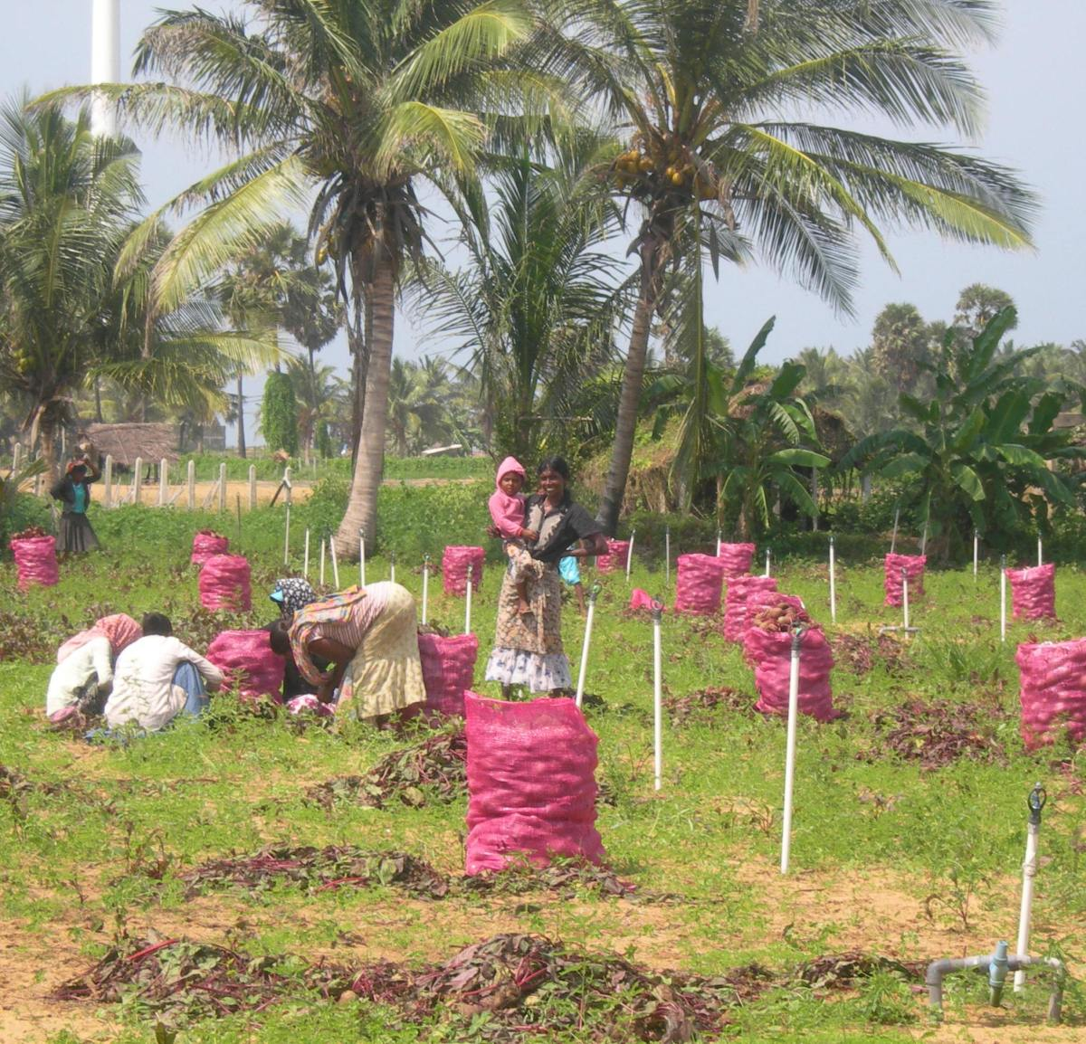Beyond the Borehole: what do ecosystem services have to do with rural watersupply?
